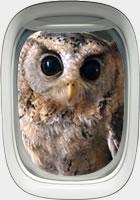 A Lufthansa owl
